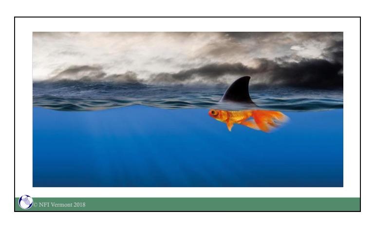 Dave Melnick's goldfish